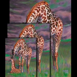 Baby and Mother Giraffes Fine Art Prints