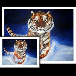 Tiger Fine Art Prints
