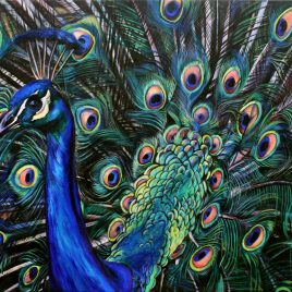 painting of a peacock by Ivy Bath